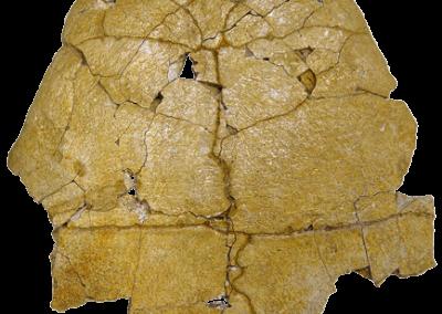 Neochelys salmanticensis