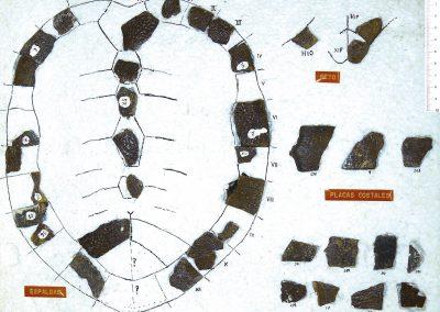 Allaeochelys casasecai