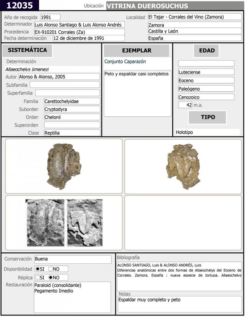 Allaeochelys-jimeneziFicha-Sala-de-las-Tortugas-12035