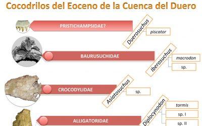 Cocodrilos del Eoceno de la Cuenca del Duero