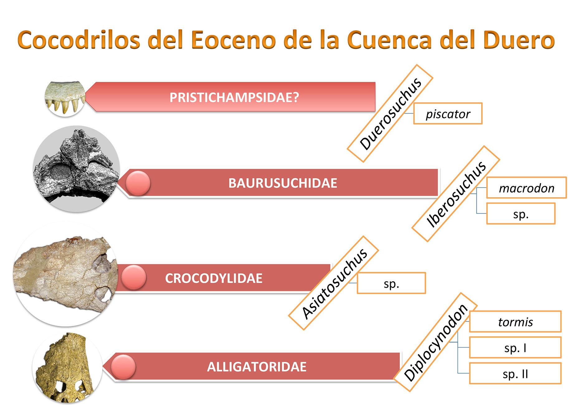 Cocodrilos-de-la-Cuenca-del-Duero