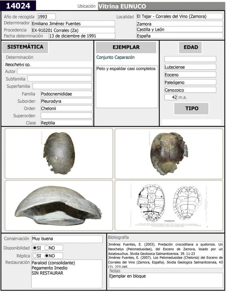 Neochelys-Ficha-Sala-de-las-Tortugas-14024