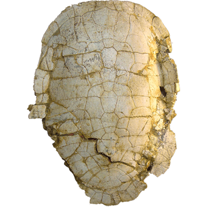 Neochelys zamorensis