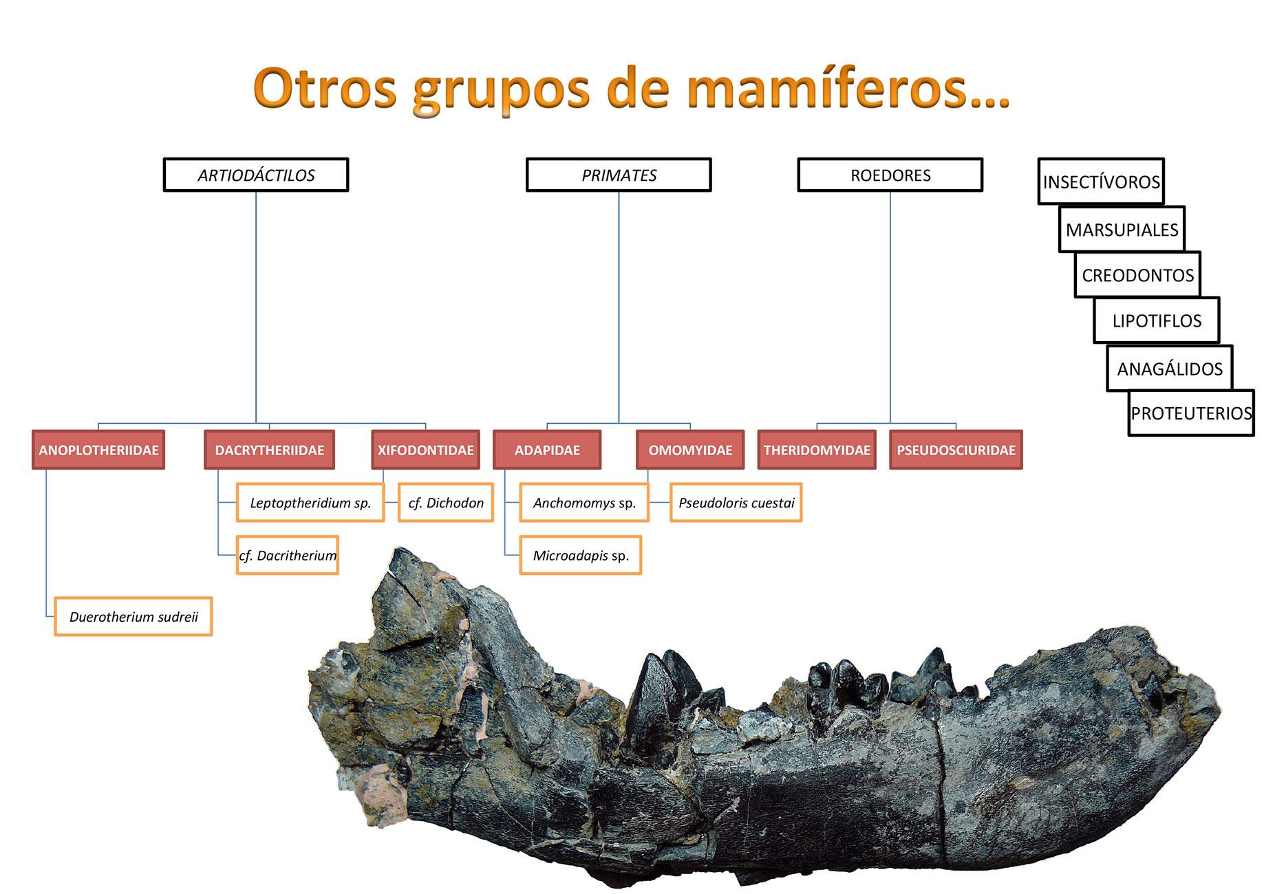 Otros grupos de mamíferos hallados en el Eoceno de la Cuenca del Duero