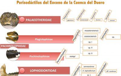 Mamíferos del Eoceno de la Cuenca del Duero