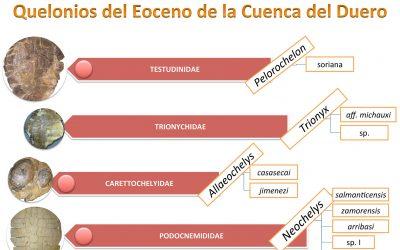 Quelonios del Eoceno de la Cuenca del Duero